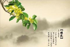 关于桂花的优美句子