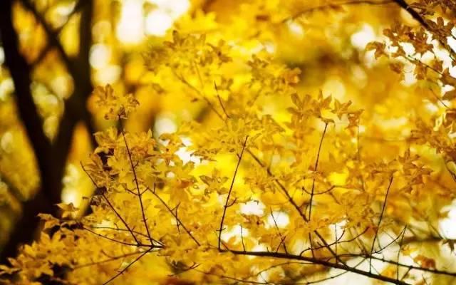 树的优美词句